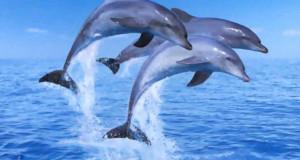 Kamarádské vztahy a akce mezi delfíny