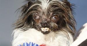 Nejošklivější pes na světě