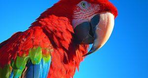 Co je třeba vědět dřív, než si přinesete domů papouška aru
