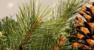 3 důvody, proč může být lepší umělý vánoční stromek