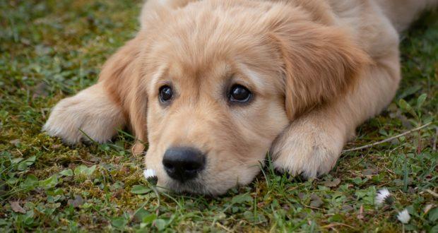 Nabídka obojků pro psy