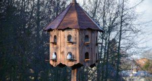 Chov holubů nabírá na popularitě